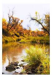 Autumn_Roche_Perce1368.JPG