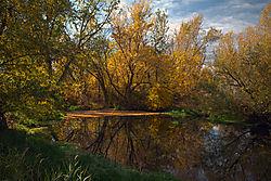 Autumn_Tree_Color_Web.jpg