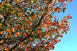 Autumn_in_Holland_5016.jpg