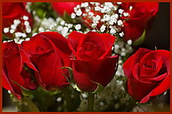 BDAY_Roses.jpg