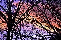 Backyard_Sunset.jpg