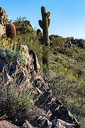 Cactus-Flowers-Sunset_2019-03-19-1.jpg