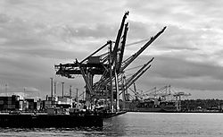 Cranes_II_BW_.JPG
