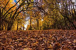 DSC4723_Fall_Leaves.jpg