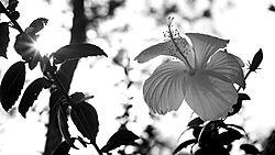 DSC_0938_-_Version_3_-_2014-07-04_at_16-59-06.jpg