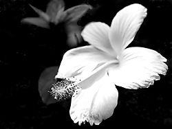 DSC_0949_-_2014-07-04_at_17-06-33.jpg
