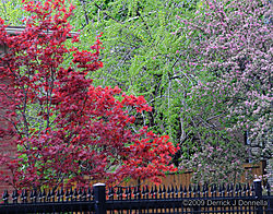 DSC_2360_11x14_Spring_Red_Purple_Green.jpg