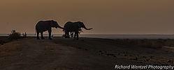 Elephant_Silhouette_.jpg