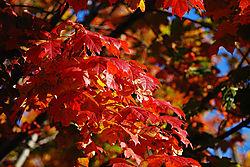 Fall-Leaves1.jpg