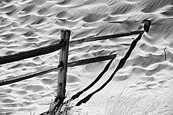 Fence_Consumed.jpg