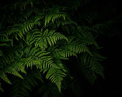 Ferns_in_the_forest_May_2019.jpg