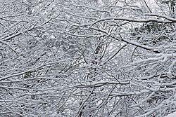 First_Snow_2009-12-05.jpg