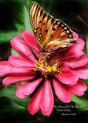 Frontyard_butterflies_004.jpg