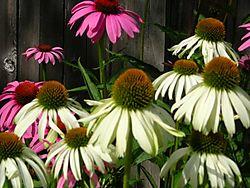Garden2010_067.JPG