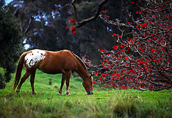 Hana_horse_and_flowers_Feb_19901.jpg