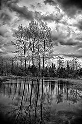 Hanagen_Road_Tree_Reflection_11.jpg