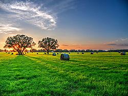 Hay_Field_Denoise_GEI.jpg