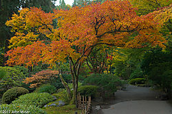JapaneseGarden02.jpg