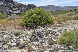 Joshua_Tree_National_Park-075717.jpg