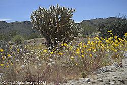 Joshua_Tree_National_Park-075786.jpg