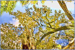 Leaf_Reflections.jpg