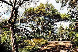 Madeira-3463_Kopie.jpg
