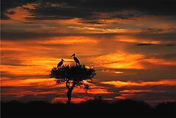 Marabou_Storks2.jpg