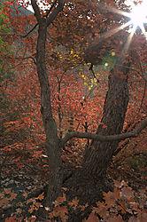 McKinttrick_Canyon.jpg