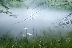 Misty_Shoreline.jpg