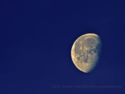 Morning_Moon_Med_WM1.jpg