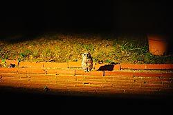 Night_Visitor.JPG