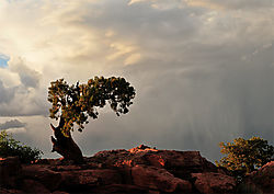 PON6007---fc-Bild-ARIL.jpg