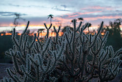 Prickly-Sunset.jpg