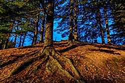 Roots-.jpg