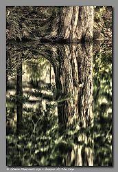SM13398_-_Version_2_Juniper_At_The_Edge.jpg