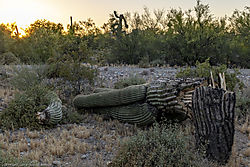 Saguaro-Sunset_2019-04-26-1.jpg