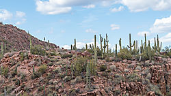 Saguaros-_Sheeps_Bridge_2021-02-16.jpg