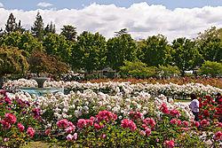 San_Jose_Municipal_Rose_Garden_0005.jpg