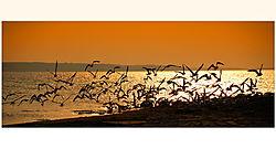 Smokey_Rafferty_Sunset.jpg
