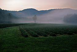Strawberry_fields.jpg