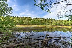 Swamp1.jpg