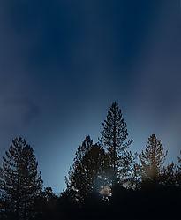 Trees_before_sun_rise.jpg