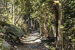 Walk_in_the_woods2.jpg
