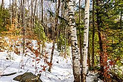 Winter_Peace-.jpg