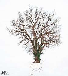 Winter_Tree2.jpg