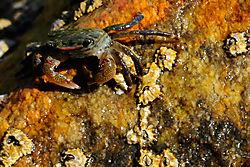 crab_and_barnacles.jpg