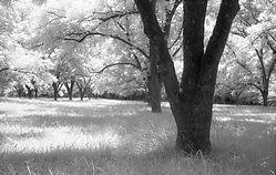 pecan-grove-15_web.jpg