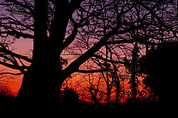 sunset61.jpg