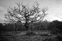 tree19.jpg