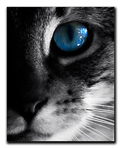 Cat-Eye1